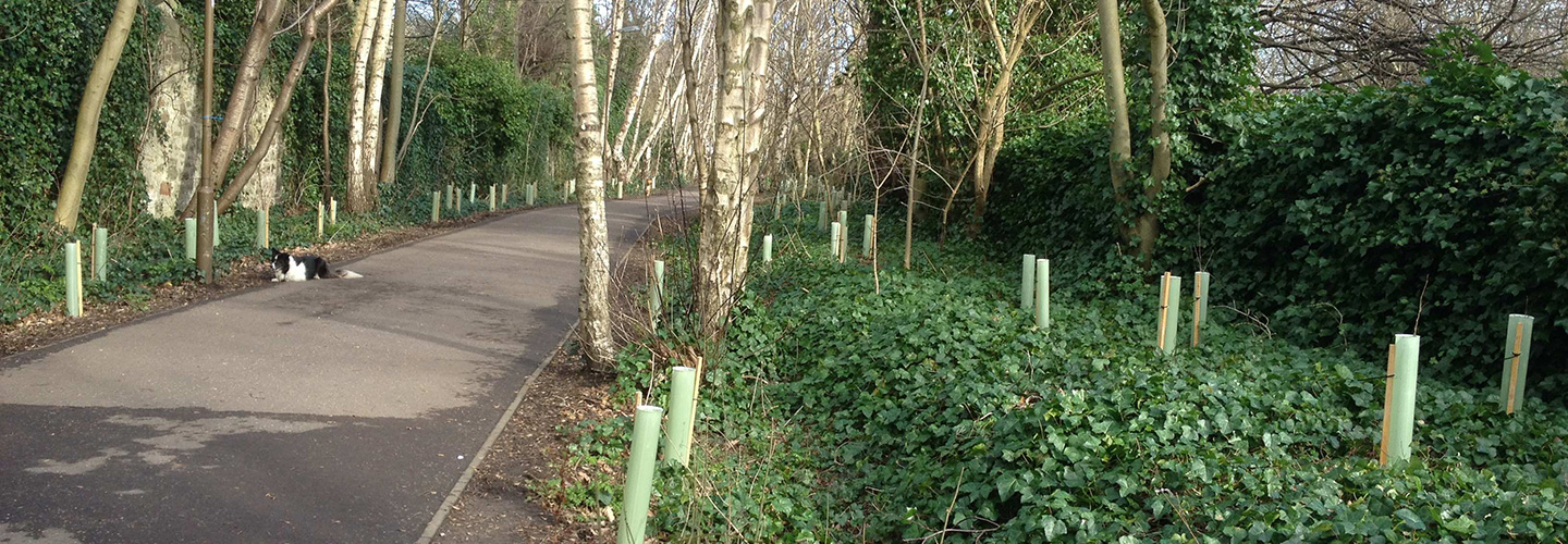 On-the-Warriston-path-opt