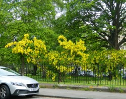 yellow and car