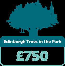Edinburgh trees in the park £750