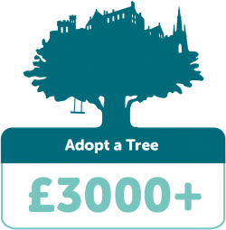 Adopt a tree £3000+